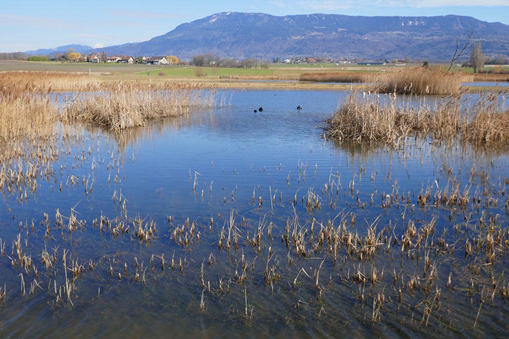 Sortie en famille Choulex balade à l'étang