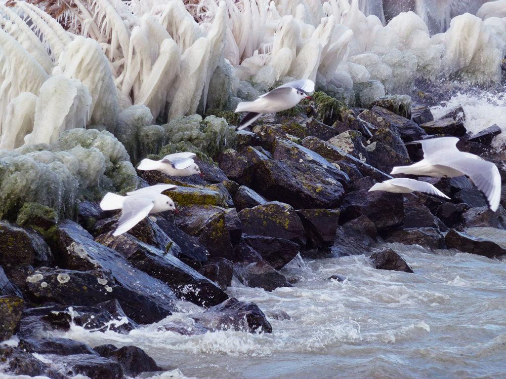Lac Léman sortie hivernale Genève