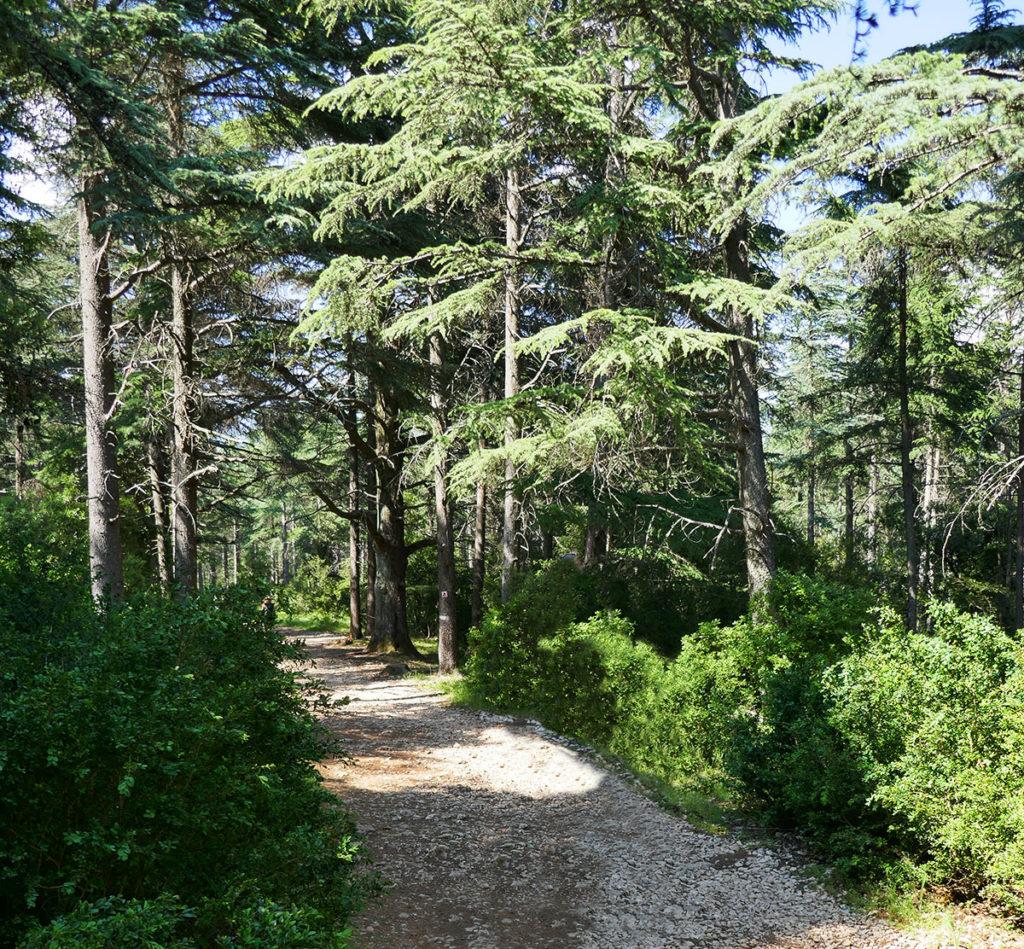 Un week-end en Luberon : la forêt de Cèdres et Bonnieux