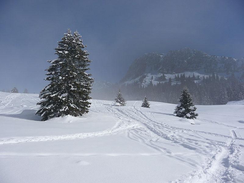 sortie au Plateau des Glières en hiver Haute-Savoie