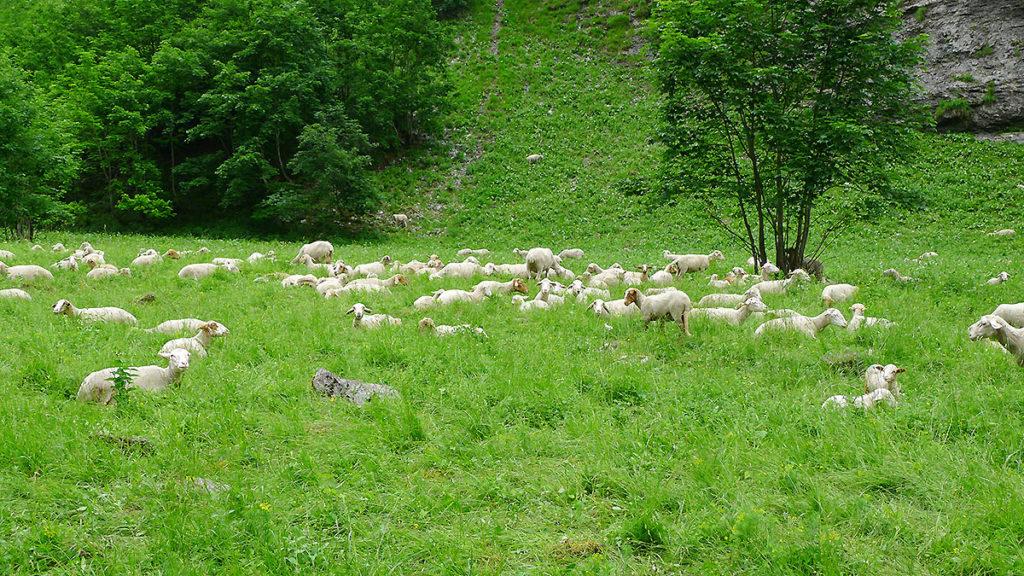 sortie et balade à Sixt le Fer à Cheval Haute-Savoie