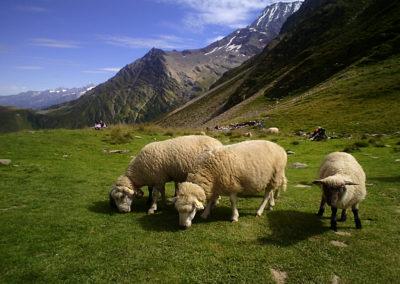 plus belles balades Haute-Savoie Col du Tricot