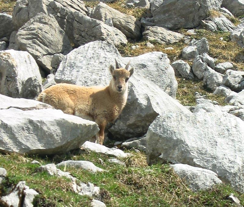 randonnee en famille grand-bornand Haute-Savoie