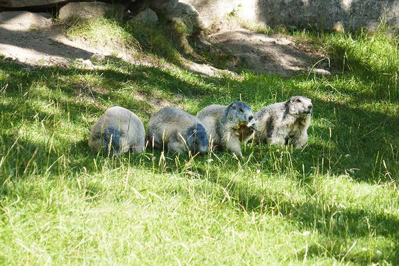 chamonix haute savoie balade en famille parc animalier