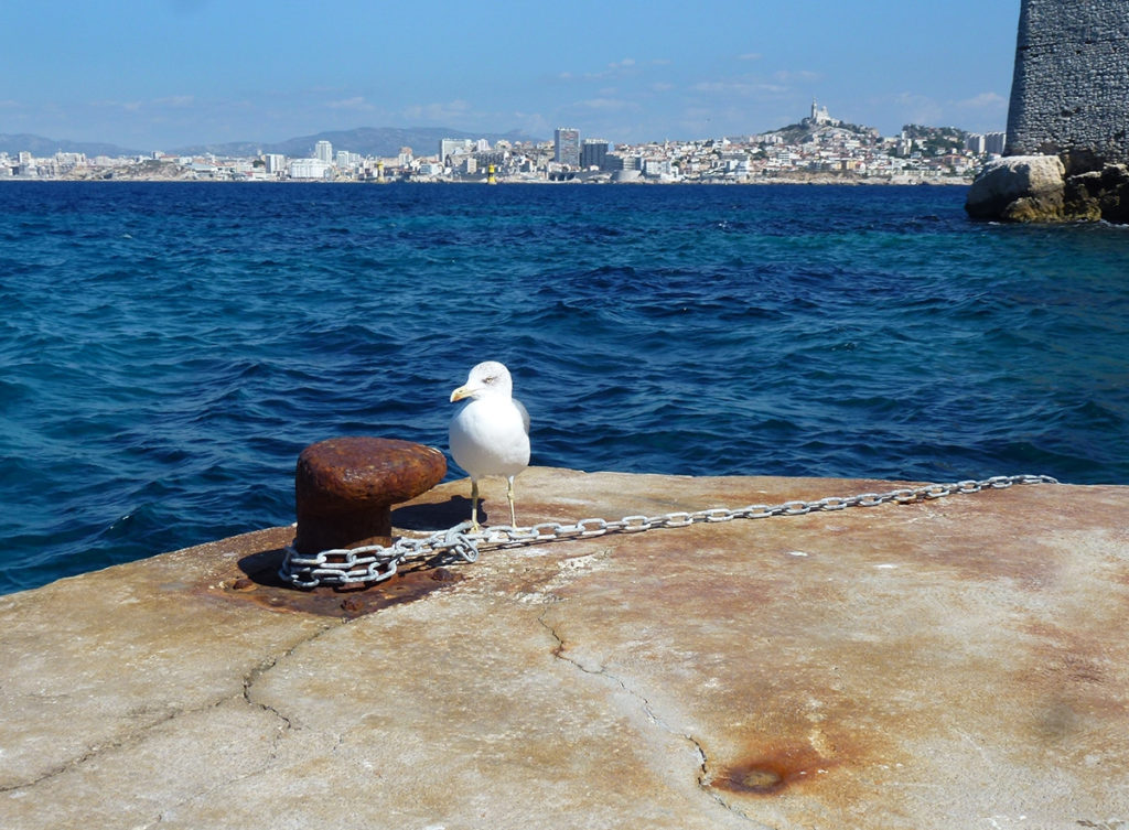 sortie et balade en mer à Marseille