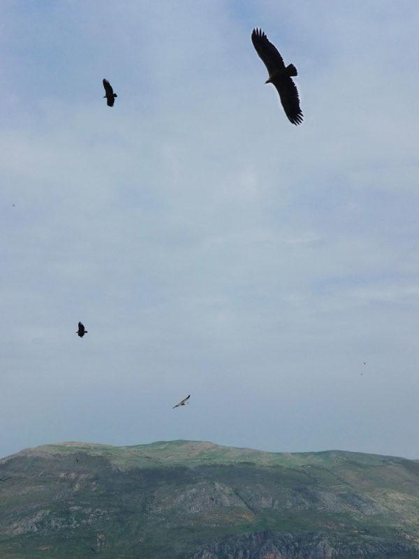 balade week-end dans le Verdon vautours Provence