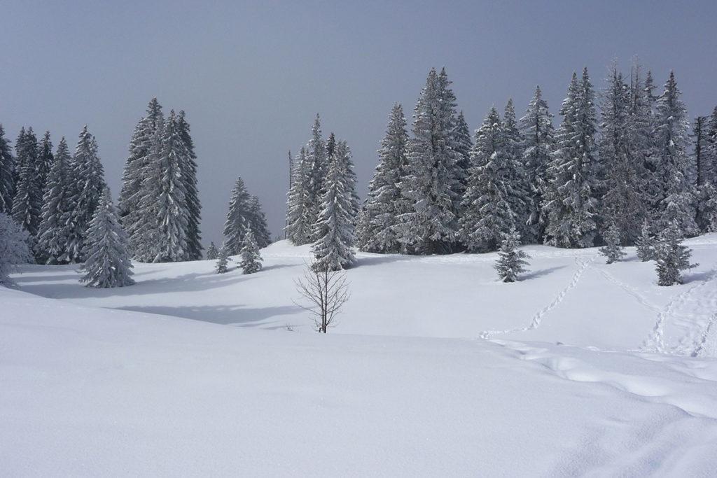 idées de sorties en Haute-Savoie au plateau des Glières