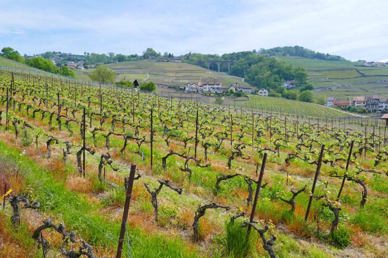 week-end balades terrasses Lavaux suisse
