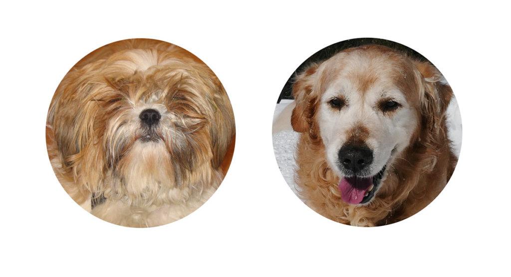balades chiens haute-savoie