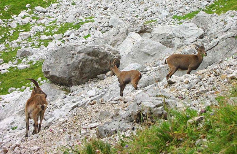 Chinaillon-Grand Bornand : randonnée au lac de Peyre