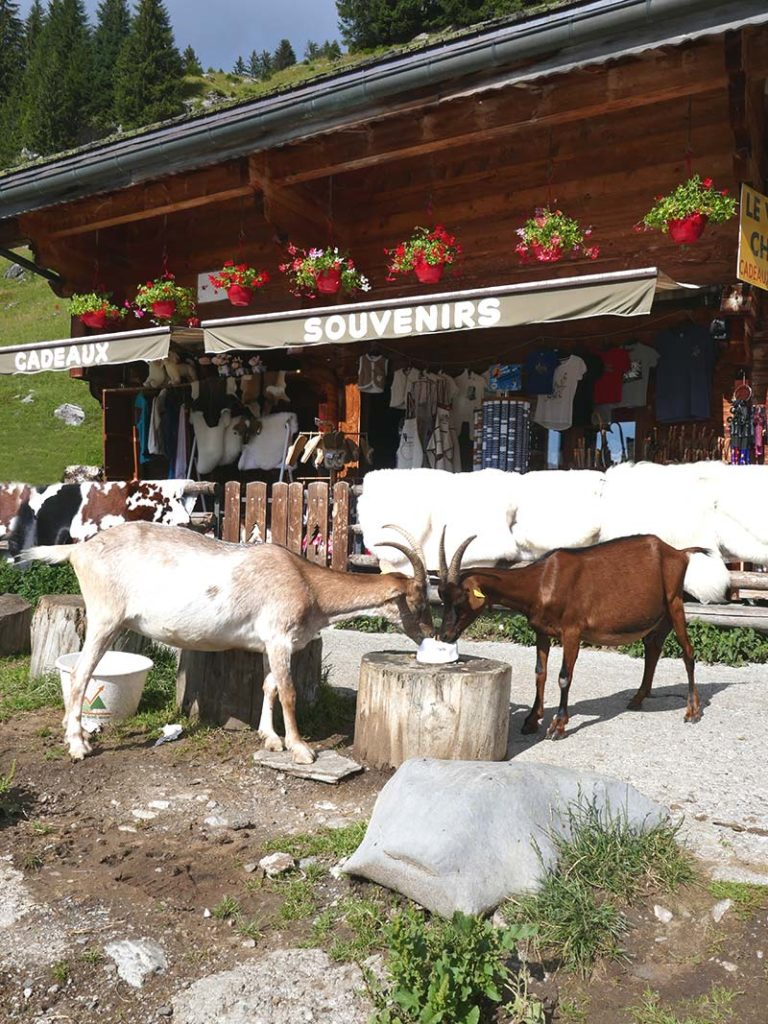 balade lindarets famille en Haute-Savoie