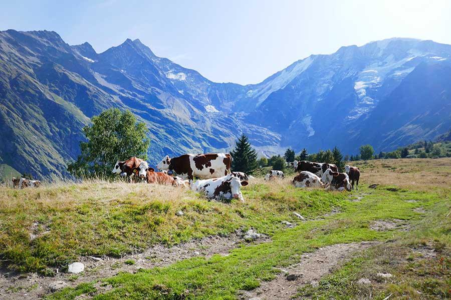 randonnee contamine-montjoie chalets et mont Truc