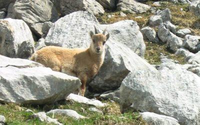 Le Chinaillon-Grand-Bornand : balade au Col de la Colombière en été